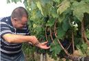 увеличен износ вино