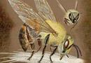 пчели мед