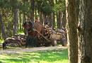 Частна фирма ще пази гората над Стара Загора от незаконна сеч