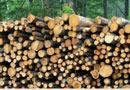 10% увеличен дърводобив