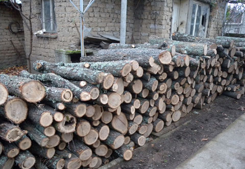 Горски стражар ръководи група за незаконна сеч и търговия на дърва