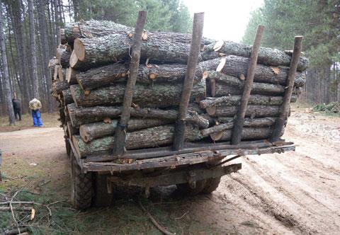 Арестуваха организирана група бракониери на дърва за огрев