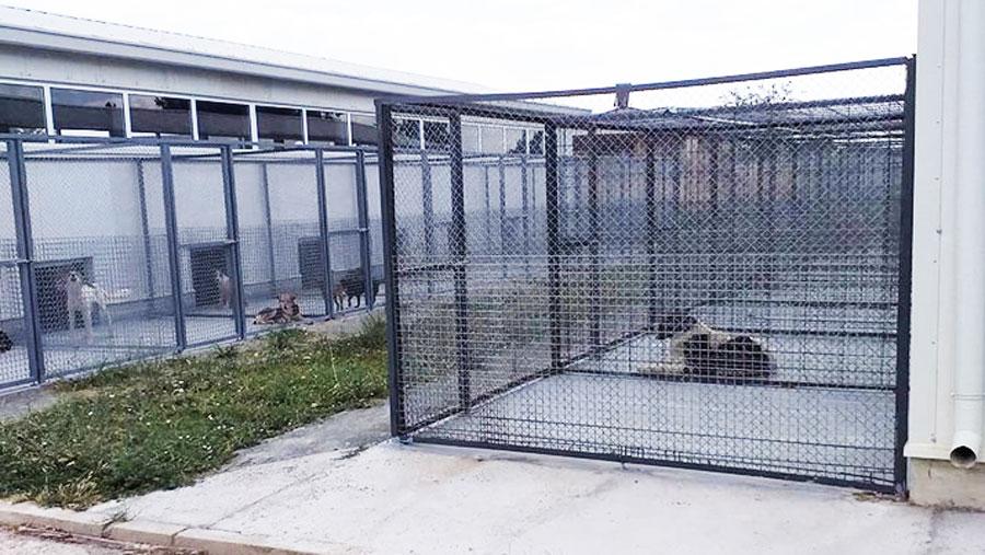 общински приют за безстопанствени животни