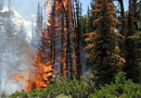 Пожароопасен сезон