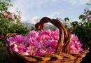 празник роза Казанлък гости цял свят