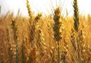 субсидии зърнопроизводители понеделник