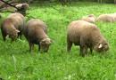 Земеделският институт в Стара Загора иска да зарадва децата с екологични косачки