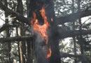 МЗХ помага на собственици на гори